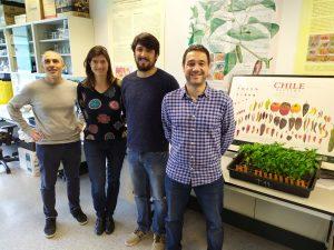 COMAV UPV researchers Santiago Vilanova, Ana Fita, Leandro Pereira and Adrián Rodríguez-Burruezo
