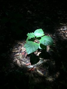 A plant with shade and sunlight